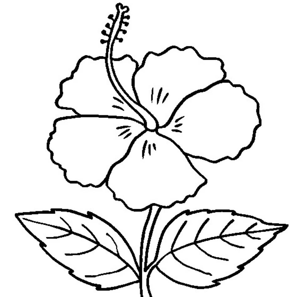 Free printable hibiscus coloring pages for kids coloring pages hibiscus coloring page izmirmasajfo