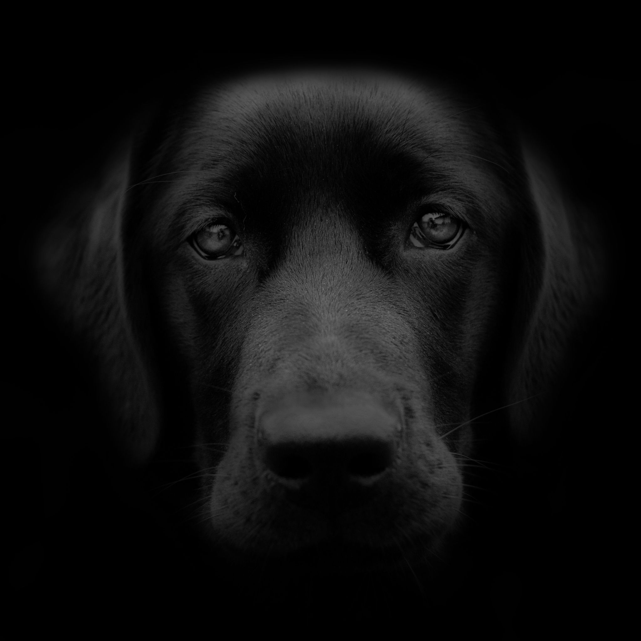 Dog portrait by Tom Egil Dørum on 500px