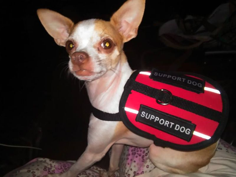 Register Your Service Dog And Emotional Support Animal Free