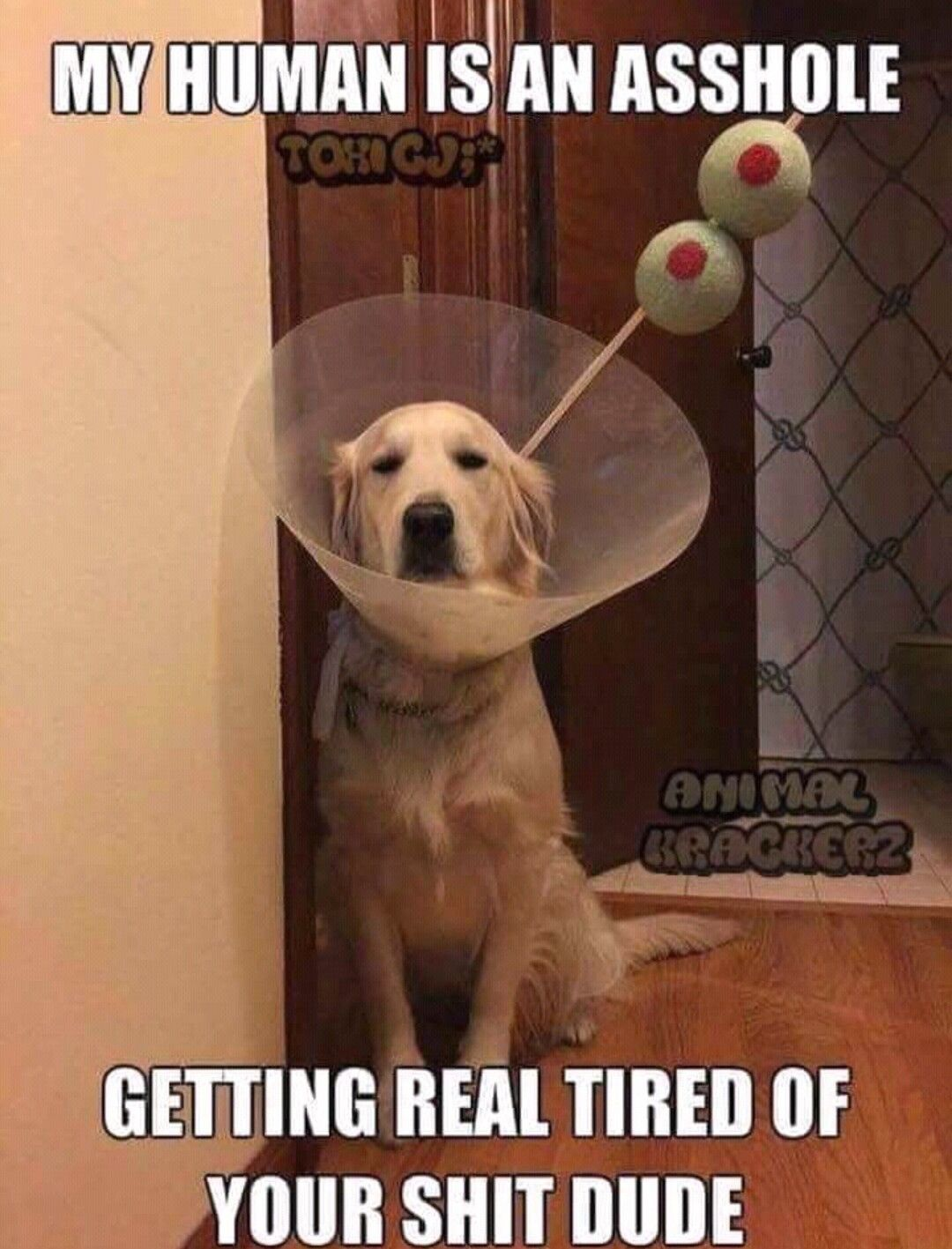 Pin By Heather On Funny Randomness Funny Animals Funny Dogs