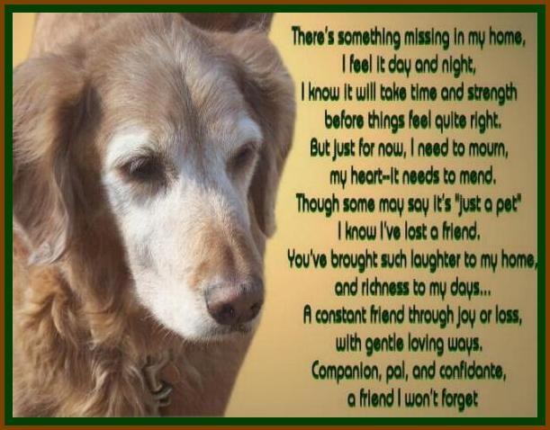 My Precious Tessa Goldenretrievers Goldens Goldenoakretrievers Dog Poems Dog Quotes Pet Loss Grief