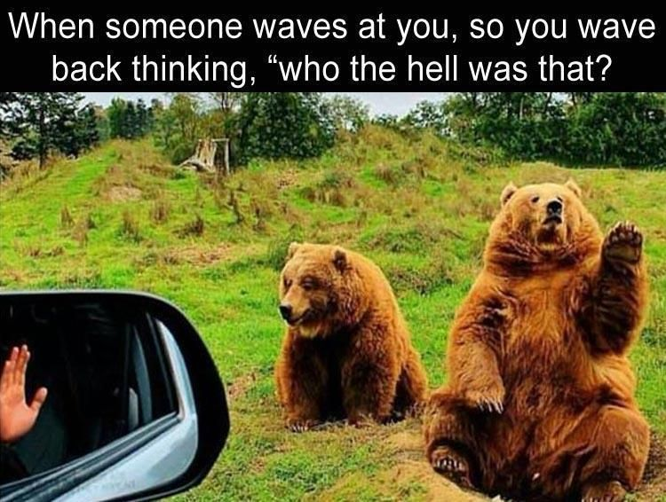 525a04cd8b16c79e588a58a71e6e1bcf bear, grizzly bear meme when someone waves at you, so you wave