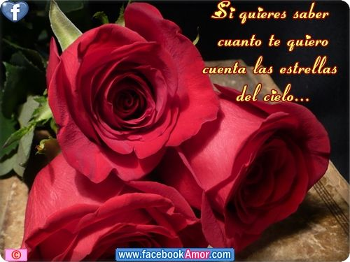 Flores De Rosas Rojas Con Frases De Amor