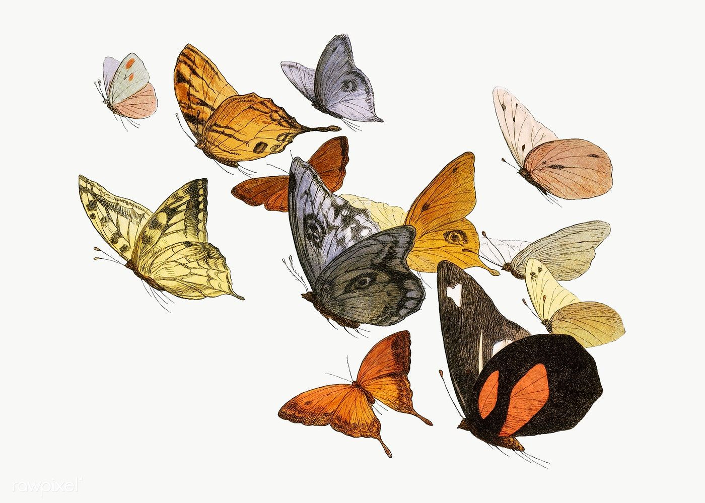 Mixed Flying Butterflies Vintage Illustration Transparent Png Premium Image By Rawpixel Com Aom Woraluck