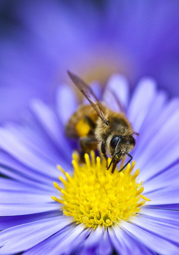 Close Up Photo of Bee on Top of Purple Flower · Free Stock Photo