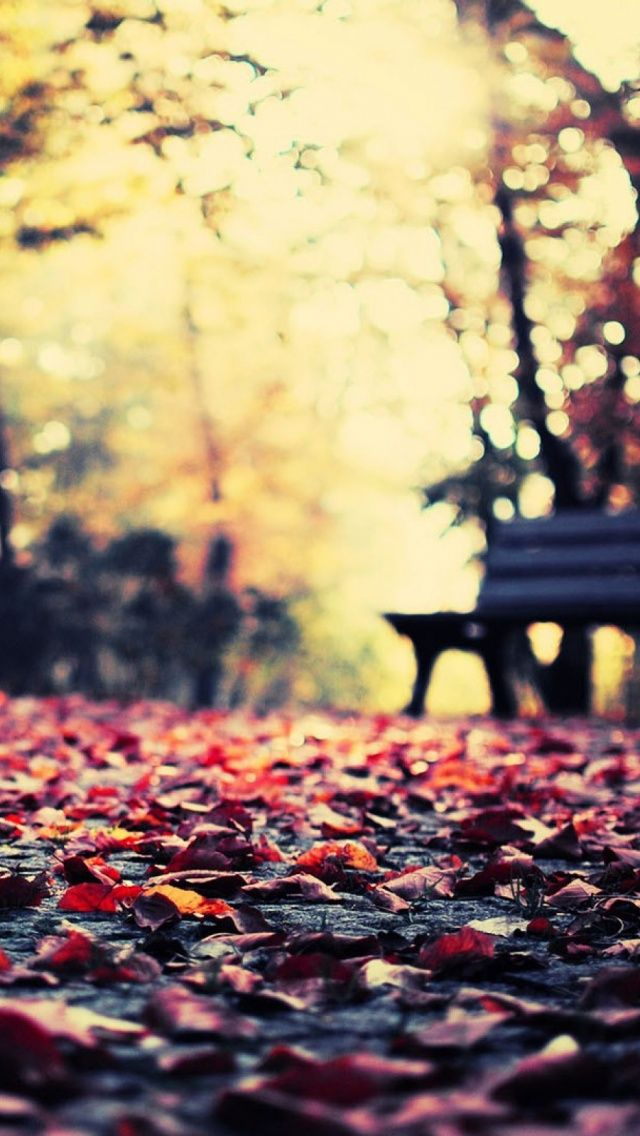 Autumn Leaves Park Bench Iphone 5 Wallpaper Tapety I