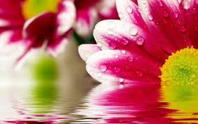Image result for flower wallpaper