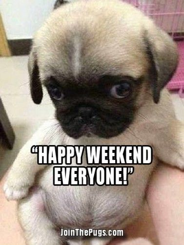 Have a Great Weekend | Join the Pugs Friends | Cute ...