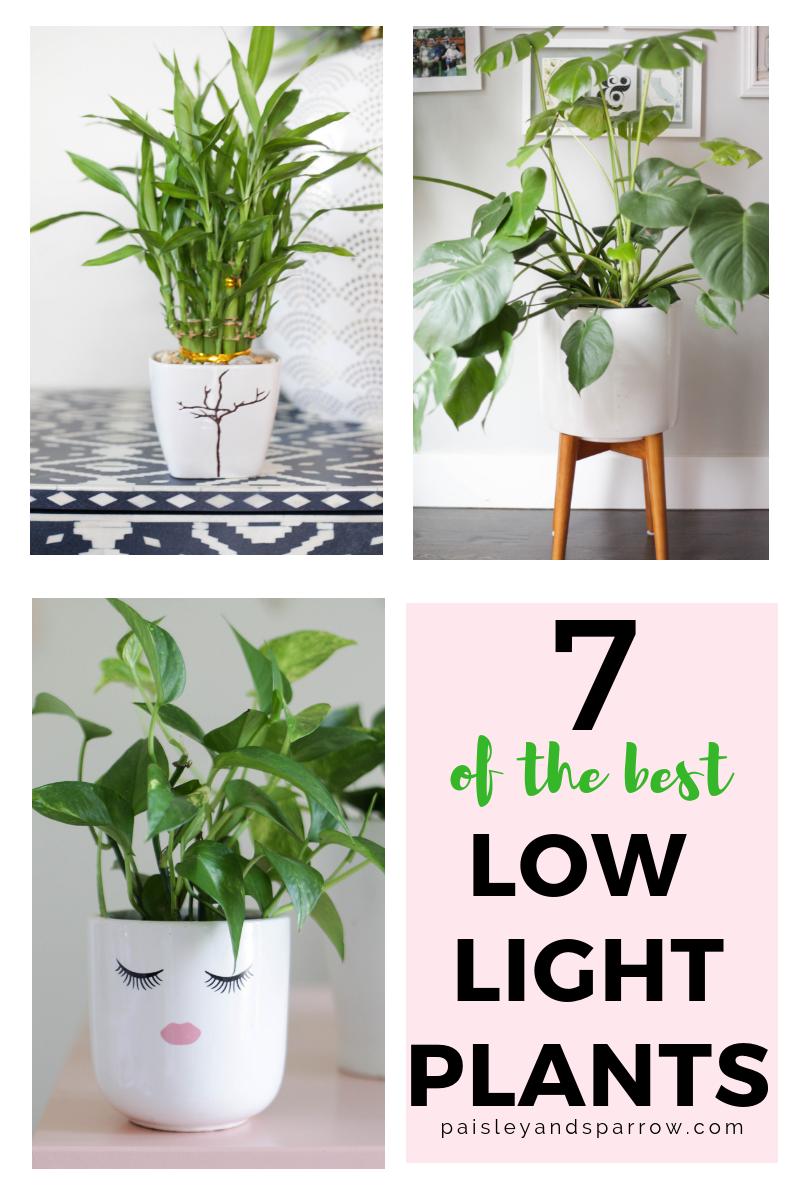 7 Amazing Low Light Indoor Plants Paisley Sparrow Low Light Plants Bathroom Plants Low Light Low Light Indoor Plants