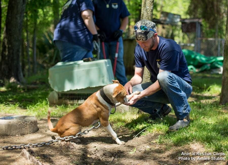 Operation Delta Dogs - April 25, 2014  Animal Rescue Corps (ARC), working with the Humphreys County Sheriff's Office, seized twelve dogs from the property of a suspected dog fighting operation in Isola, MS  © Amiee Stubbs Photography