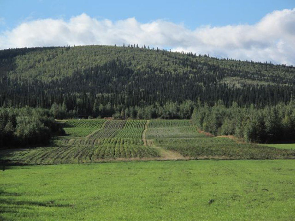 """""""LARGEST ORGANIC FARM IN THE STATE OF ALASKA"""" Acre"""
