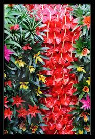 tropical flowers displays - Google Search