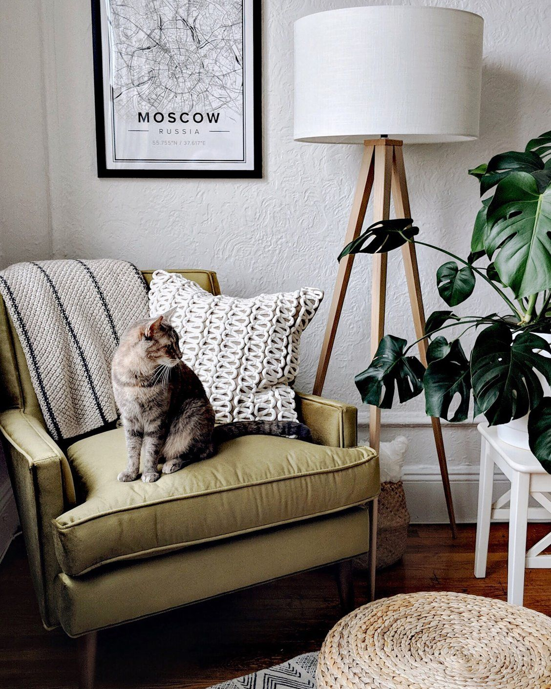 Arhauspets Get The Best Seat In The House Sdamiani Cat