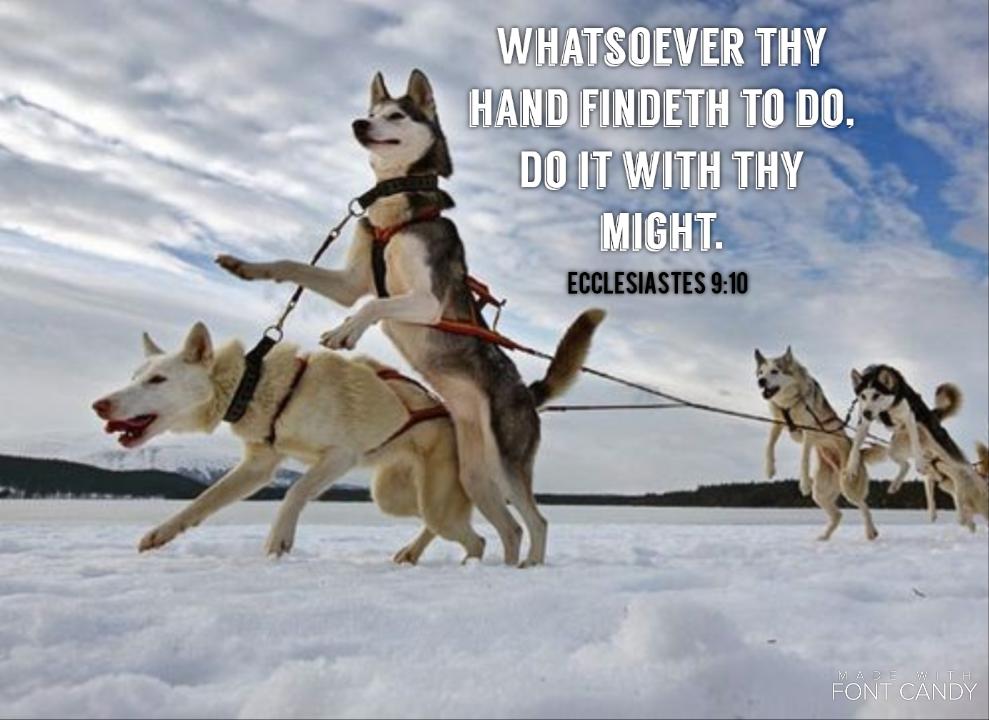 Image result for kjv bible verse husky dog