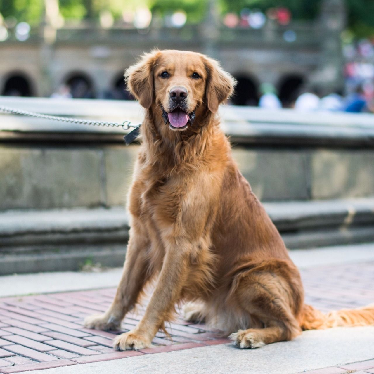 George Golden Retriever 3 Y X2f O Central Park New York Ny He Doesn T Know His Name At Three Years Old It S Quite Unfortunate His Hearing