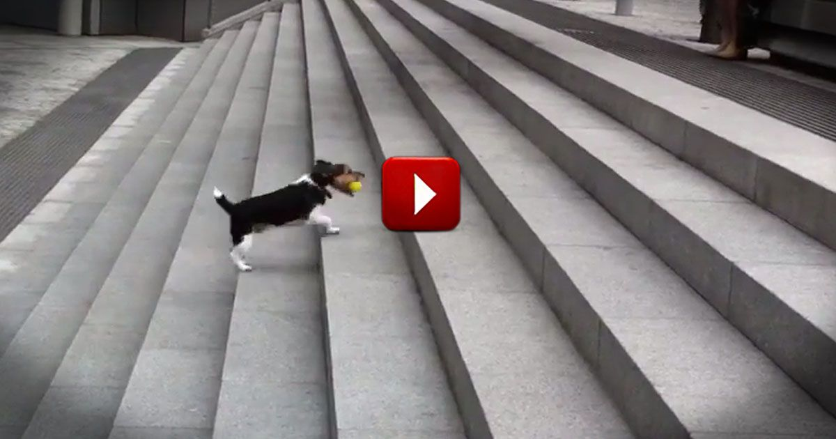 It Starts With A Dog And His Ball - What Happens Next Is Downright Adorable