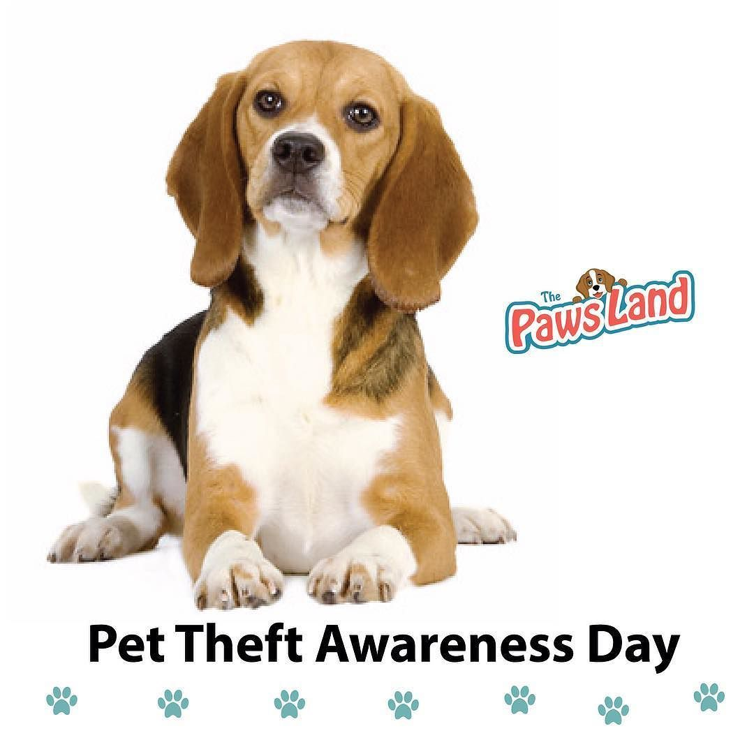 Pet Theft Awareness Day Is Meant To Call Attention To The