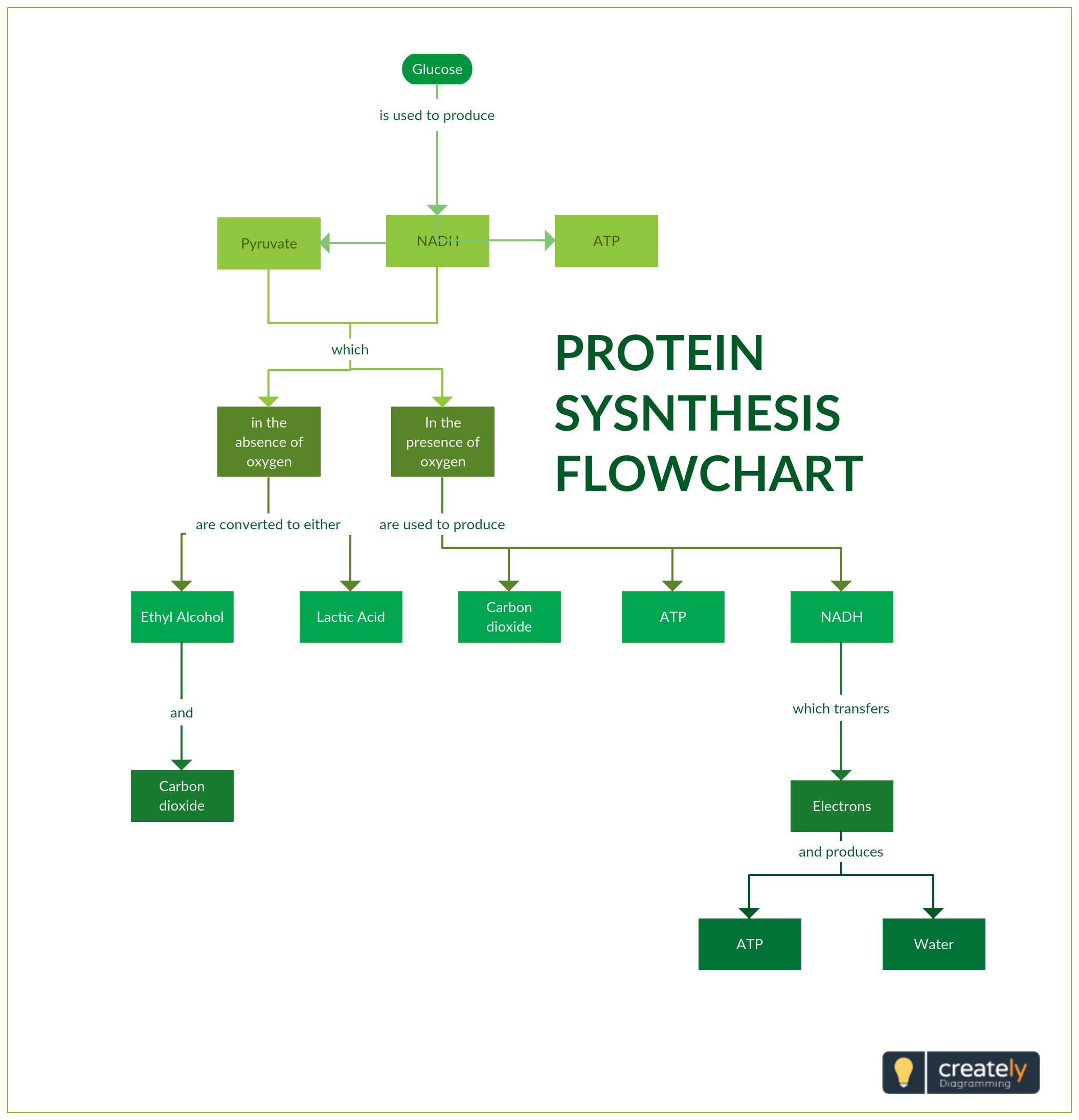Protein Synthesis Flowchart - Protein Synthesis Flow Chart shows the process  of one of the most