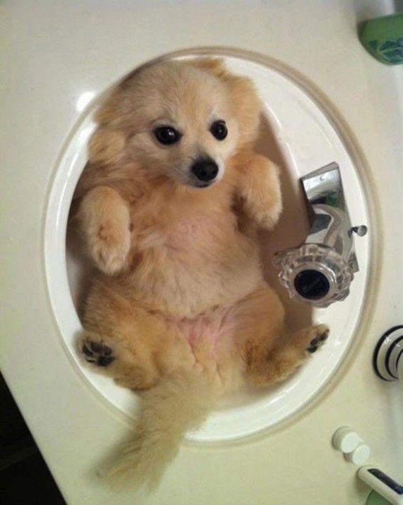 Dog in a sink