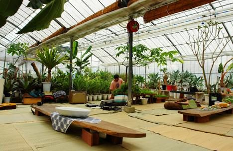 66 Things You Can Grow At Home In Containers, Without a Garden is part of Indoor garden Restaurant - From apples and figs to bananas and guavas  and hops  Learn more about 66 things you can grow at home