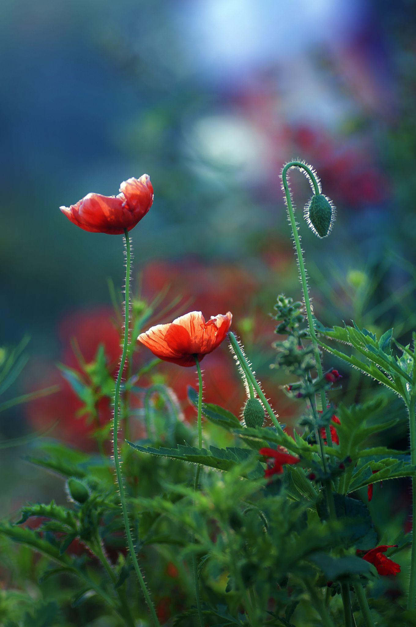 Bloom By Amitabh Kumar On 500px Pinterest