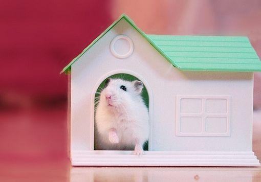 En nuestra #tiendaonline tenemos un montonazo de cosas para #roedores