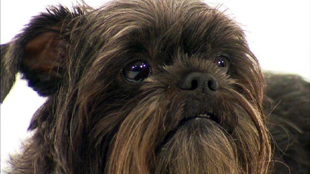 Dog Breeds A K Videos Animal Planet Dog Breeds Dogs Dogs 101