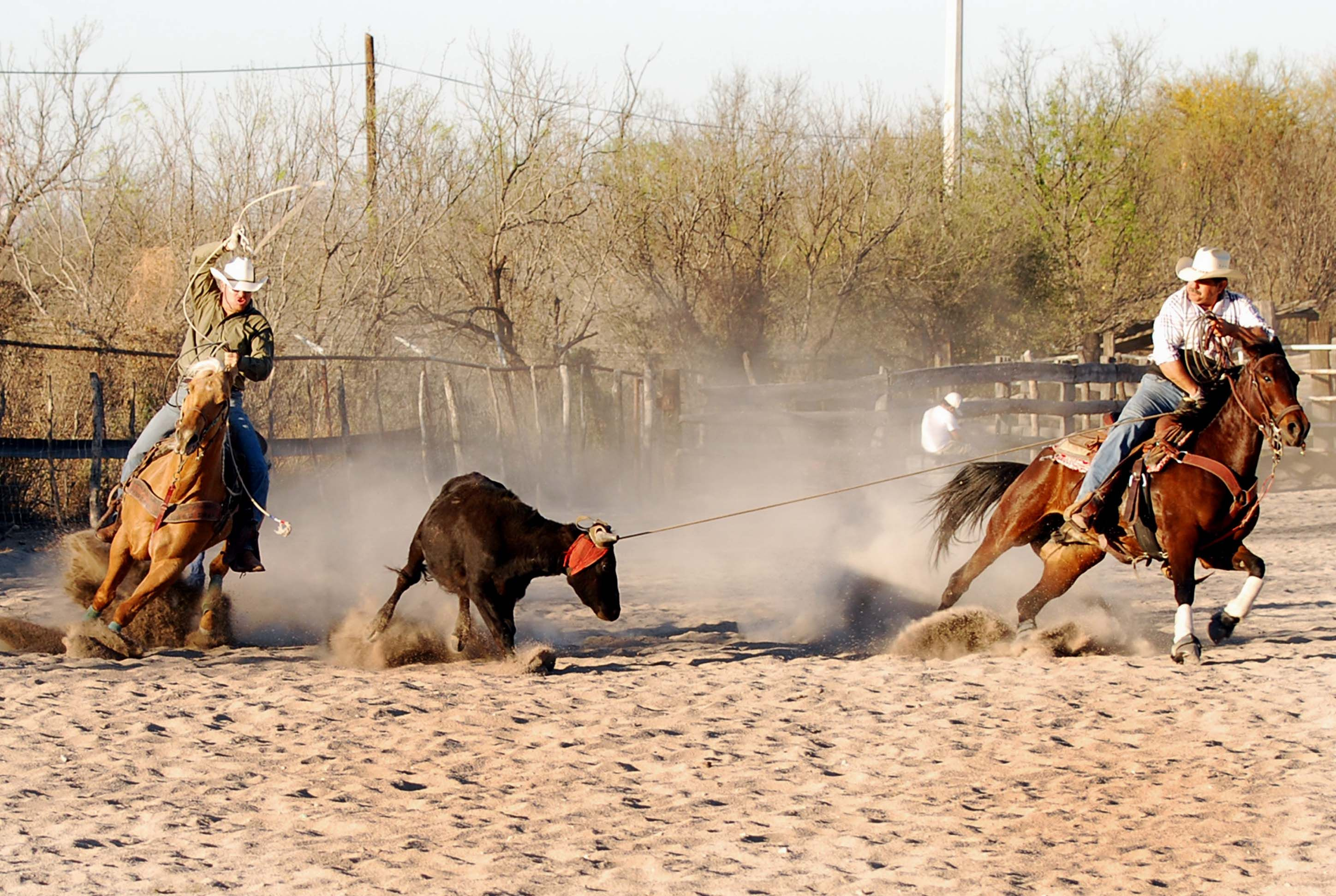 Swinging and delivery team roping