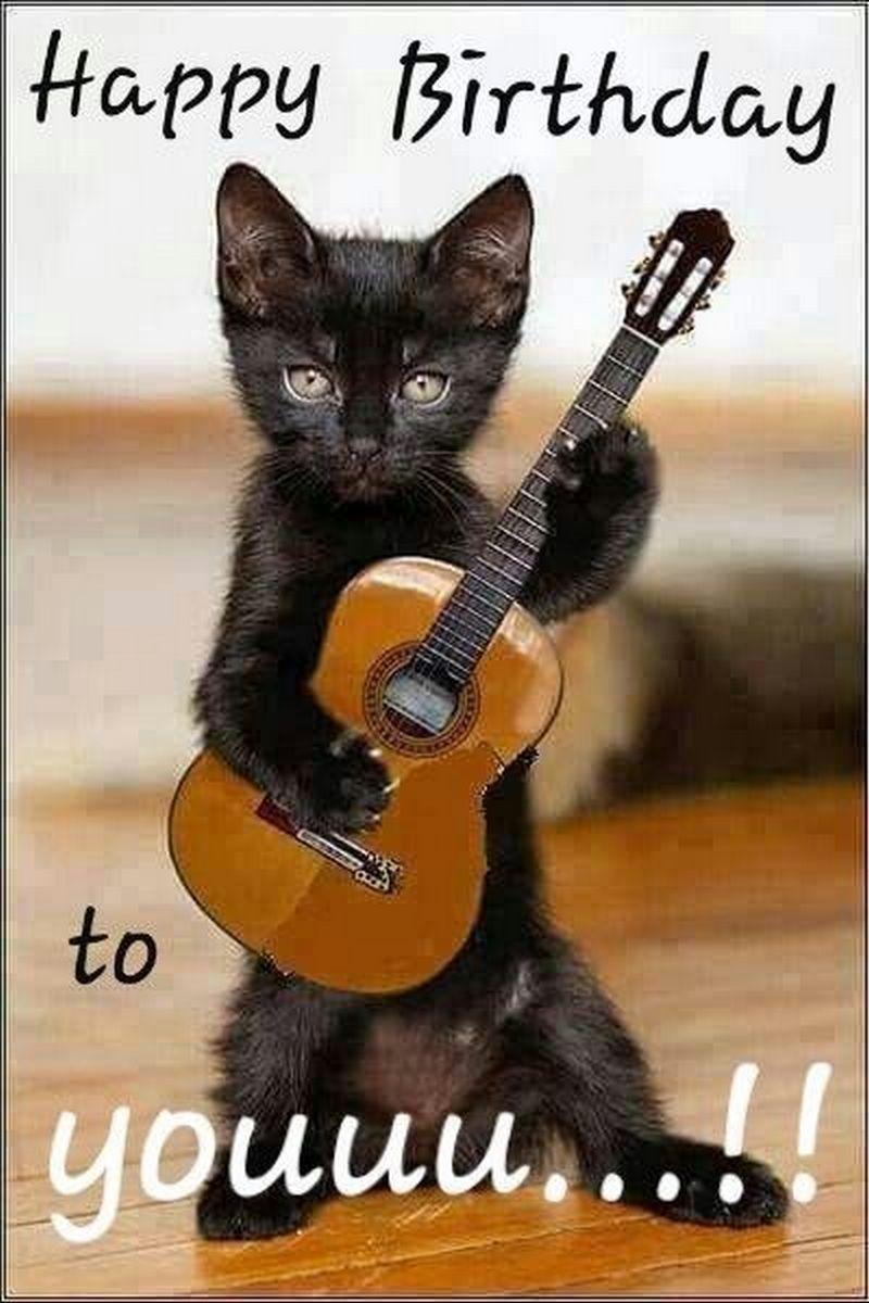 Black Cat Birthday Meme : black, birthday, Funny, Birthday, Memes, Feline, Lovers, Memes,, Wishes,, Happy