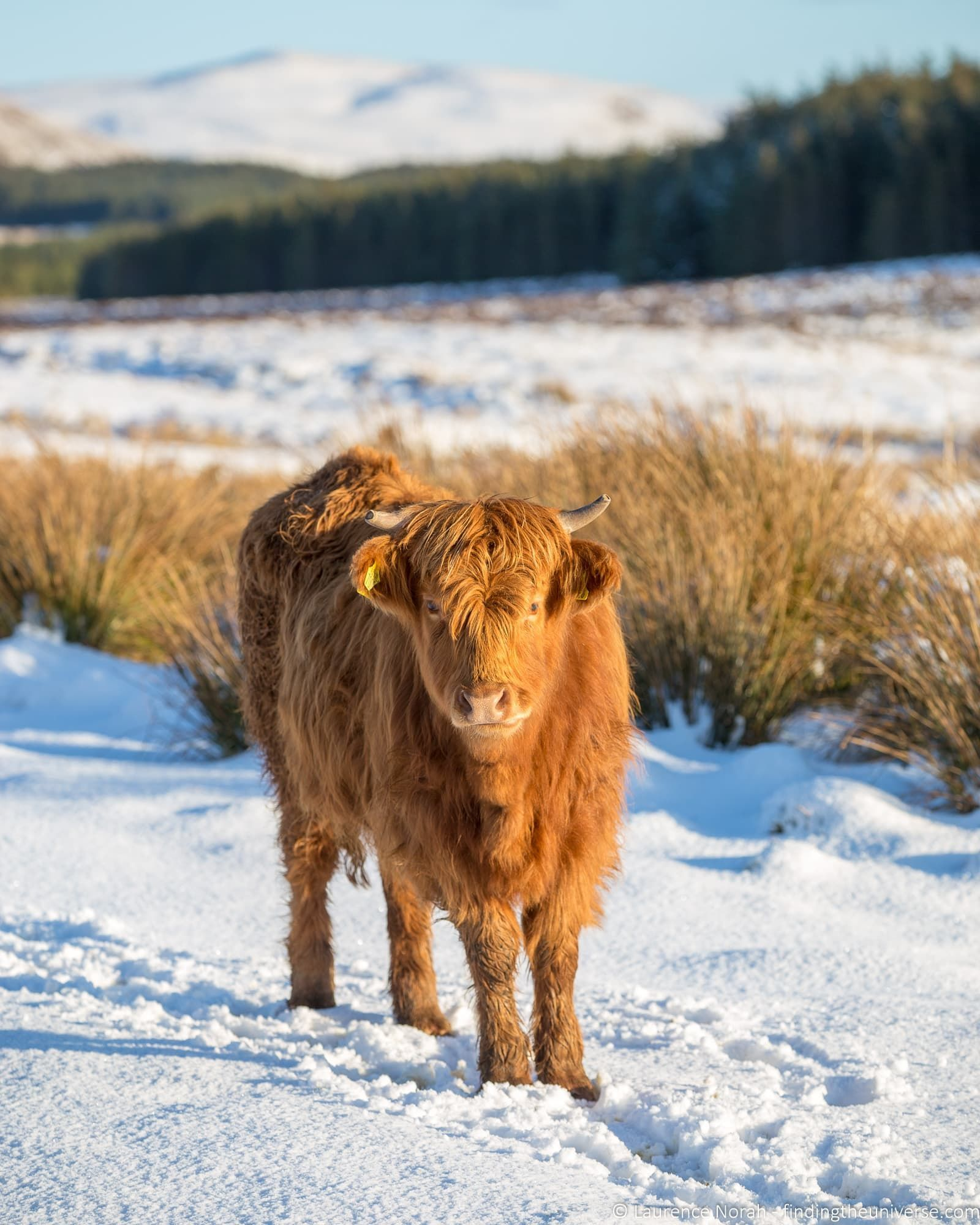 Winter in Scotland A Guide to Visiting Scotland in Winter Everything you need to know about visiting Scotland in Winter from what to do through to what to pack and tips f...