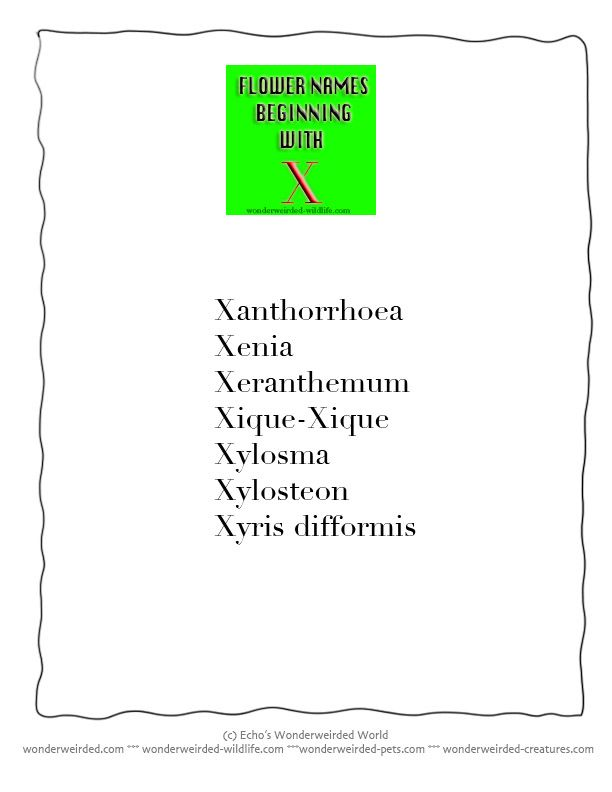 Flower Names that start with Letter X, List of Flower beginning
