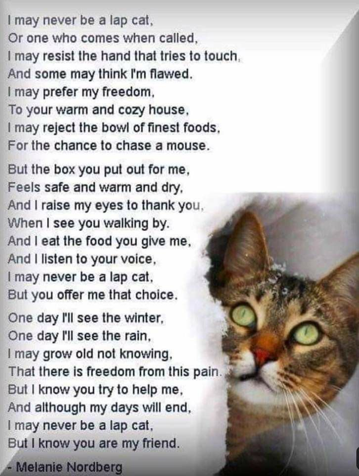 Pin by Dawn Bynon on Pets=Love!!! in 2020