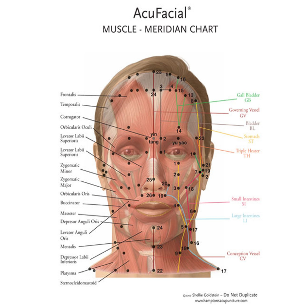 meridian face chart - Google Search | Meridians, Face yoga ...