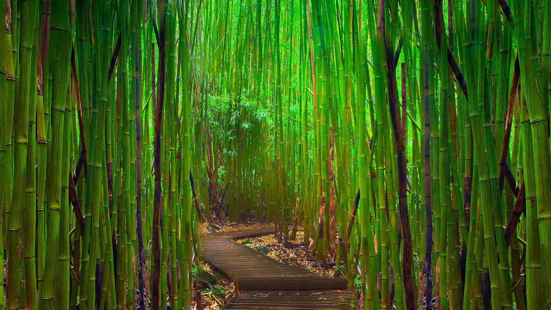 85 bamboo hd wallpapers backgrounds wallpaper abyss for Bamboo wallpaper for walls
