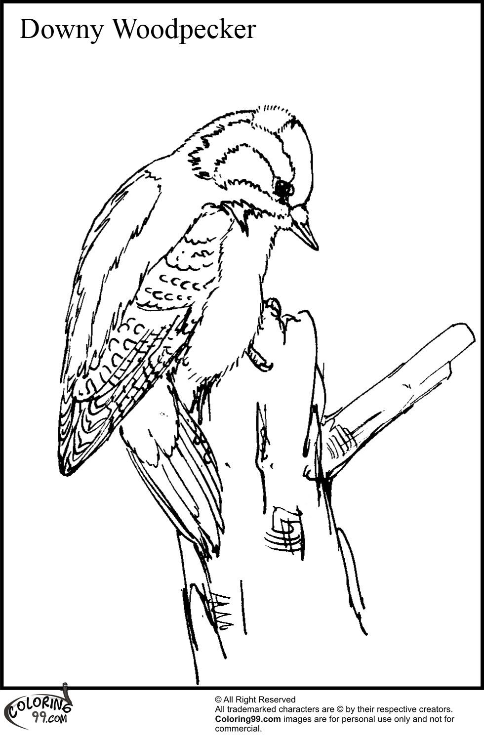 Downy Woodpecker Coloring Pages Jpg 980 1500 Coloring Pages