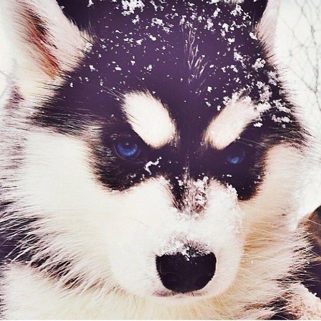 Owner tagged. Beautiful pup #Padgram