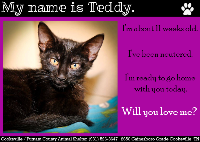 June is Adopt a Shelter Cat Month!! Visit adorable cats