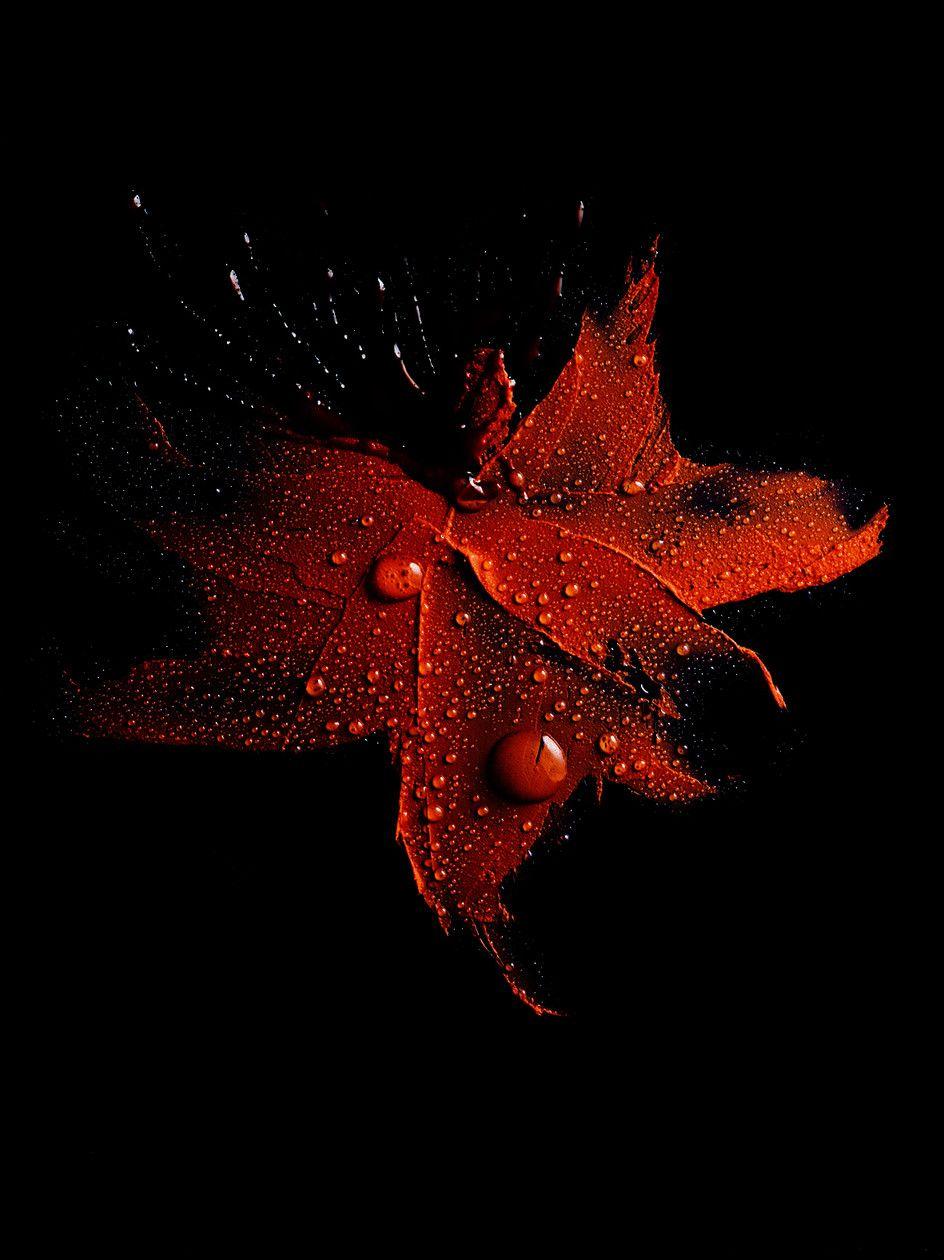 De Toutes Les Couleurs Paysage Magnifique Noir Et Blanc Photographie Fond Noir Fleur Noir