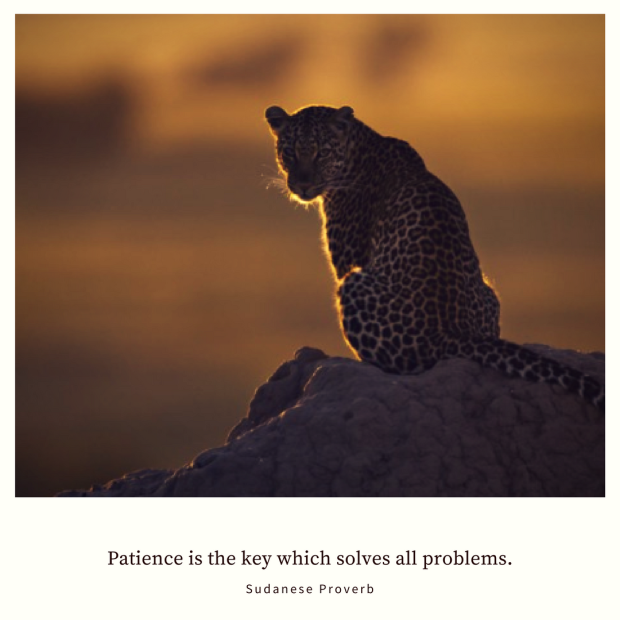 African Proverbs 3. Patience Is The Key Which Solves All Problems.