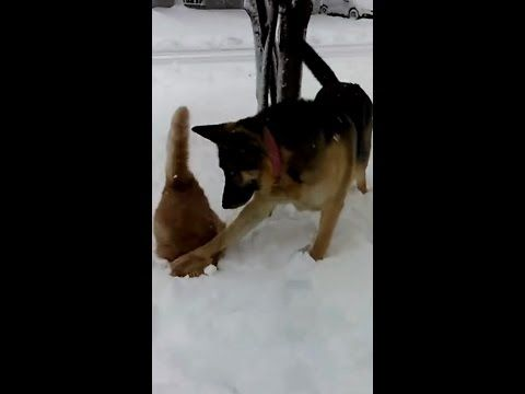 Dog Pushes Cat 39 S Face In Snow Quot Hey Look Snow Quot