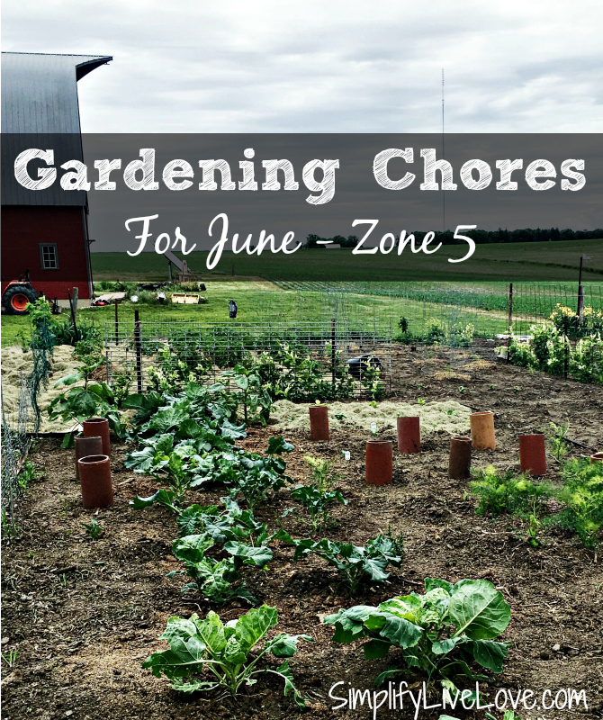 June Garden Chores For Zone 5 {Eastern Iowa & Beyond