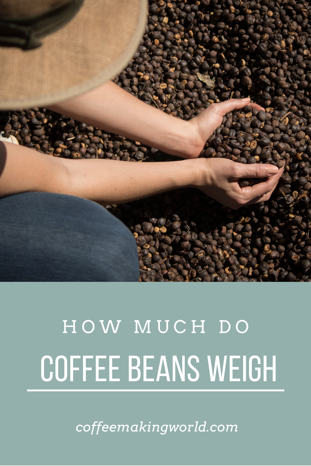 HOW MUCH DO COFFEE BEANS WEIGH in 2020 How to dry basil