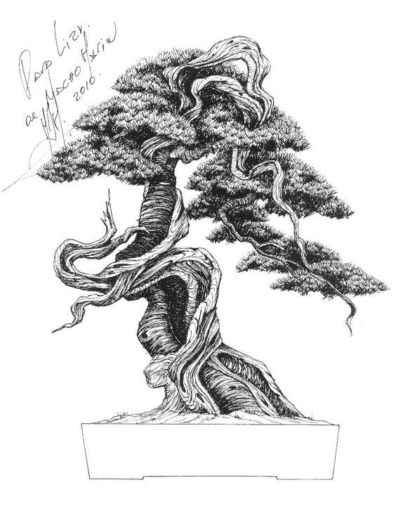 Bonsai Drawing : bonsai, drawing, Brent, Walston, Introduction, Arts,, Bonsai, Usually, Conforms, Conventions,, Guidelines,…, Tattoos,, Tree,, Painting