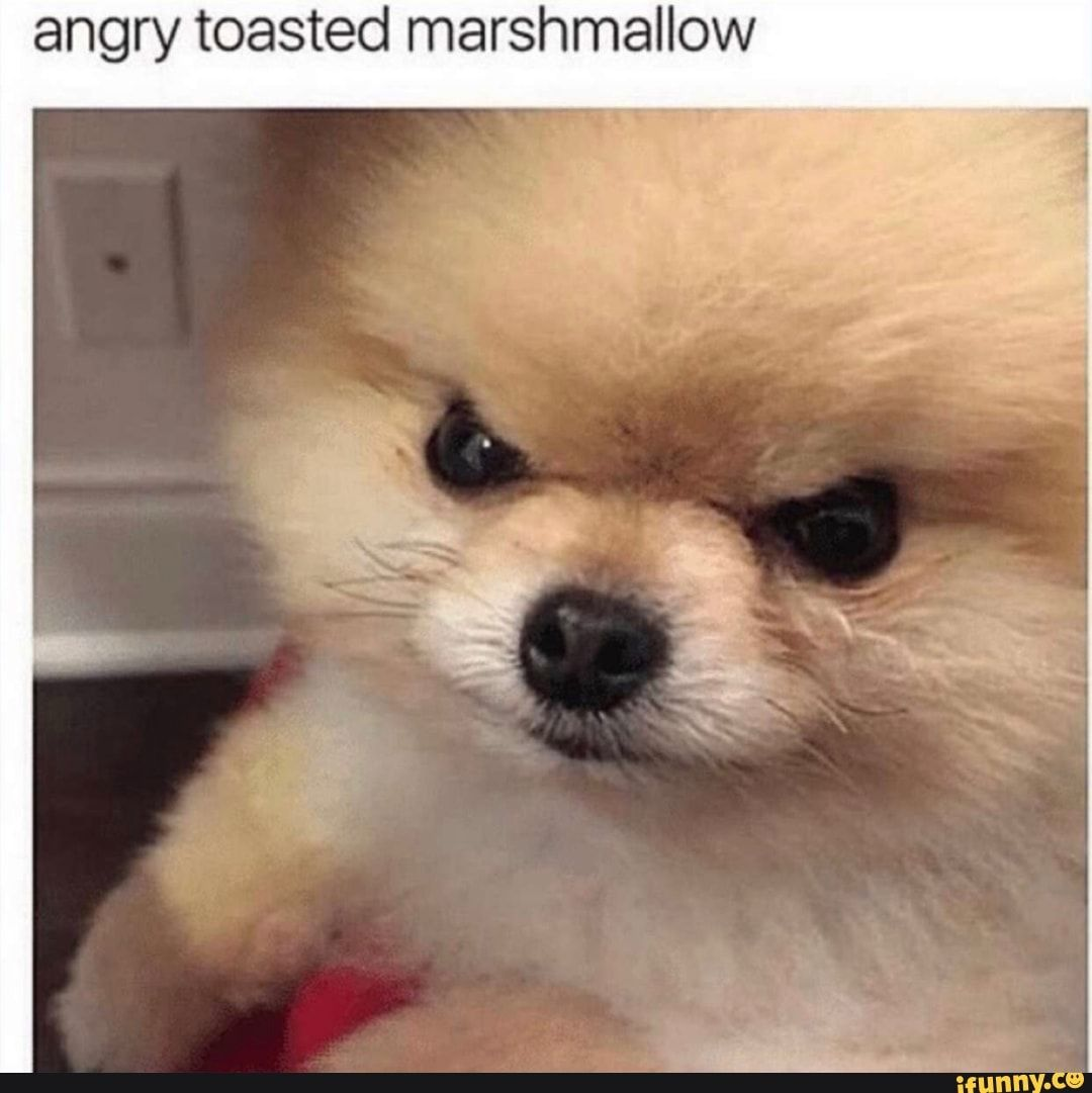 Angry Toasted Marshmallow Ifunny Steam Avatar Mood Pics Dankest Memes