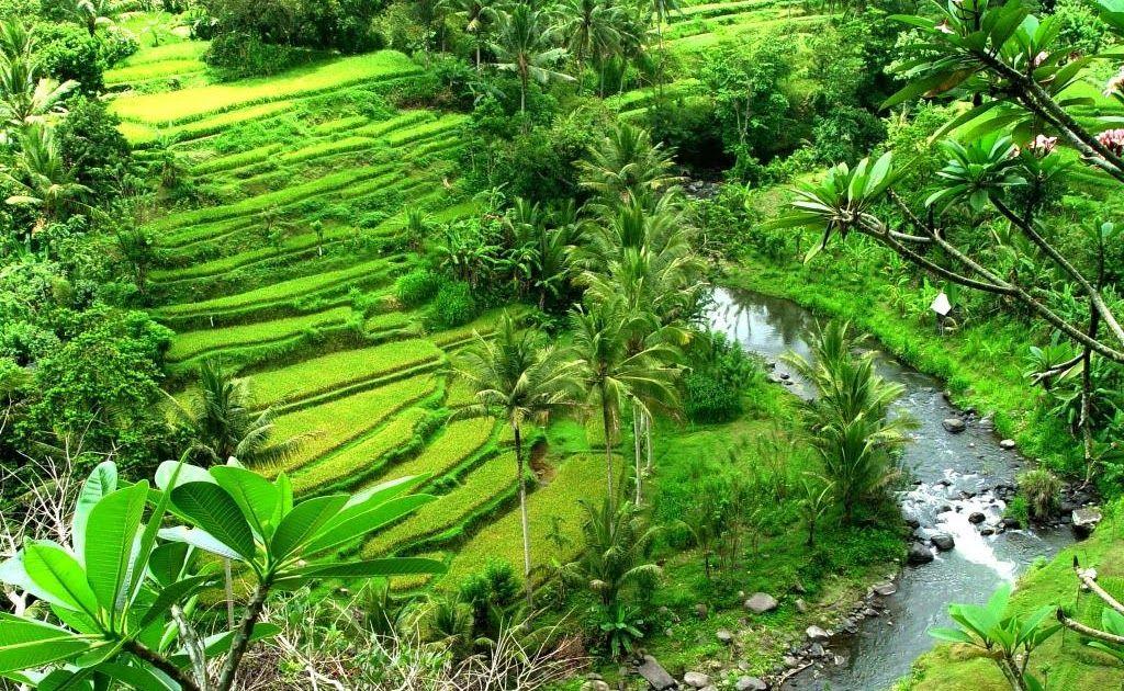 Gambar Desa Sawah Gambar Desa Sawah Gambar Rumah Pedesaanhttp Pemandanganoce Blogspot Com 2017 11 Gambar Desa Sawah Html Pemandang Pemandangan Alam Pedesaan