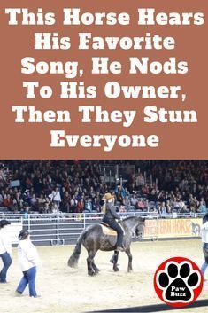 This Horse Hears His Favorite Song, He Nods To His Owner, Then They Stun Everyone #animalsandpets