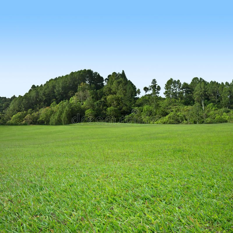 Grass And Tree On Blue Sky Green Grass Field With Trees On Blue Sky Sponsored Blue Sky Grass Tree Field Photoshop Landscape Landscape Grass Field Garden grass background for photoshop