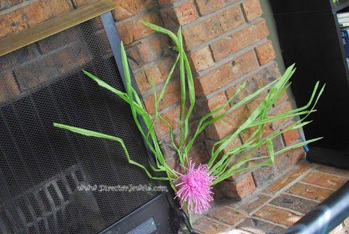 Seaweed Octonauts Birthday Party Decoration Ideas | Under the Sea Ocean Decor at directorjewels.com