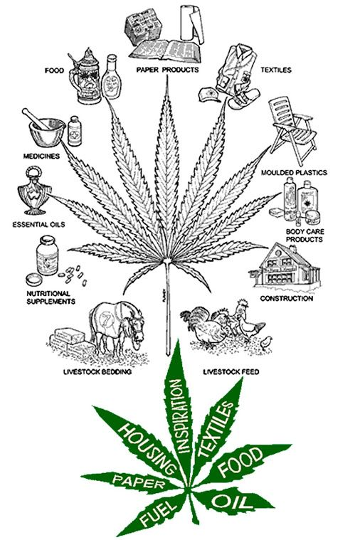 The Many Uses of Hemp | Cannabis Legal and Business