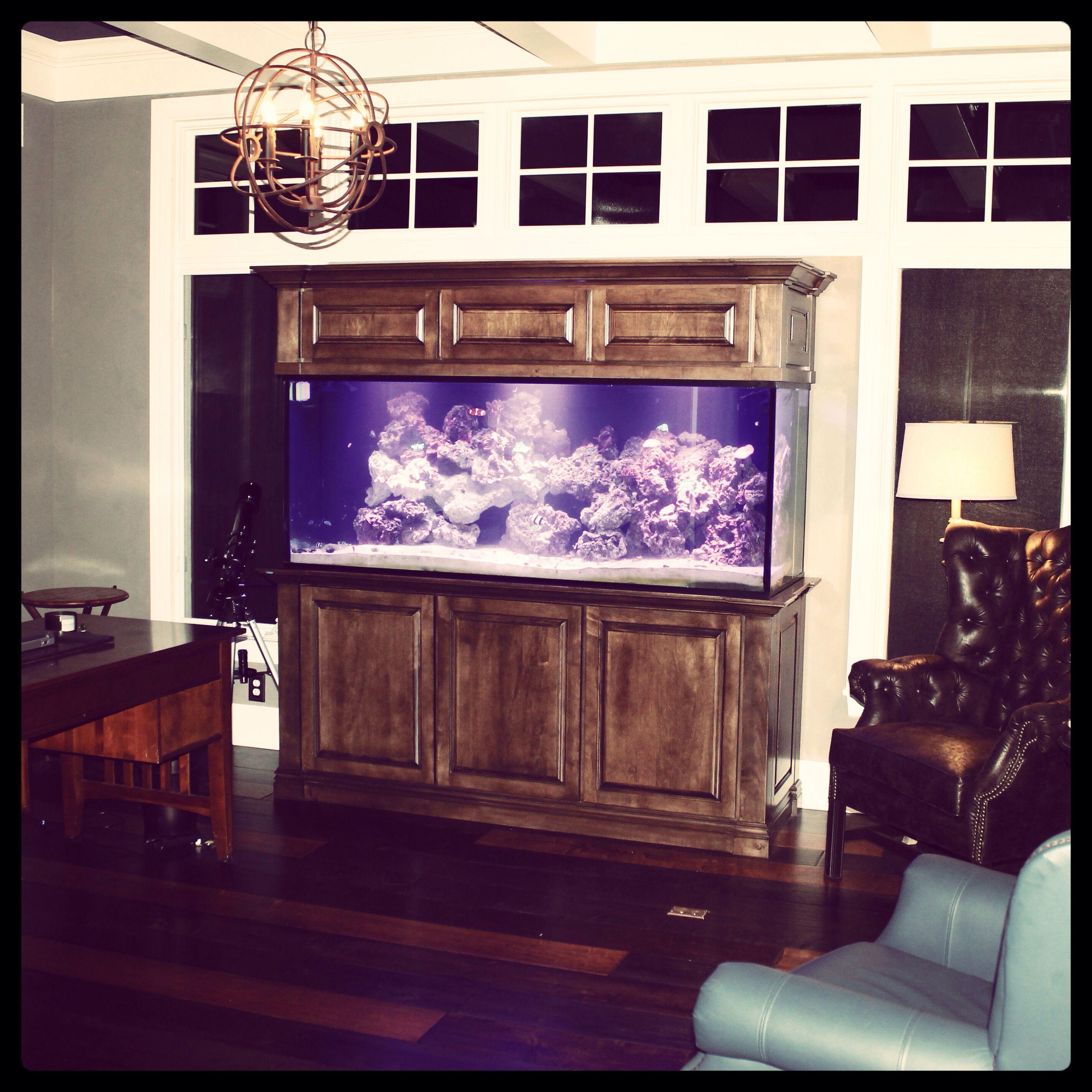 office aquariums. 220 Aquarium / Home Office. Office Aquariums